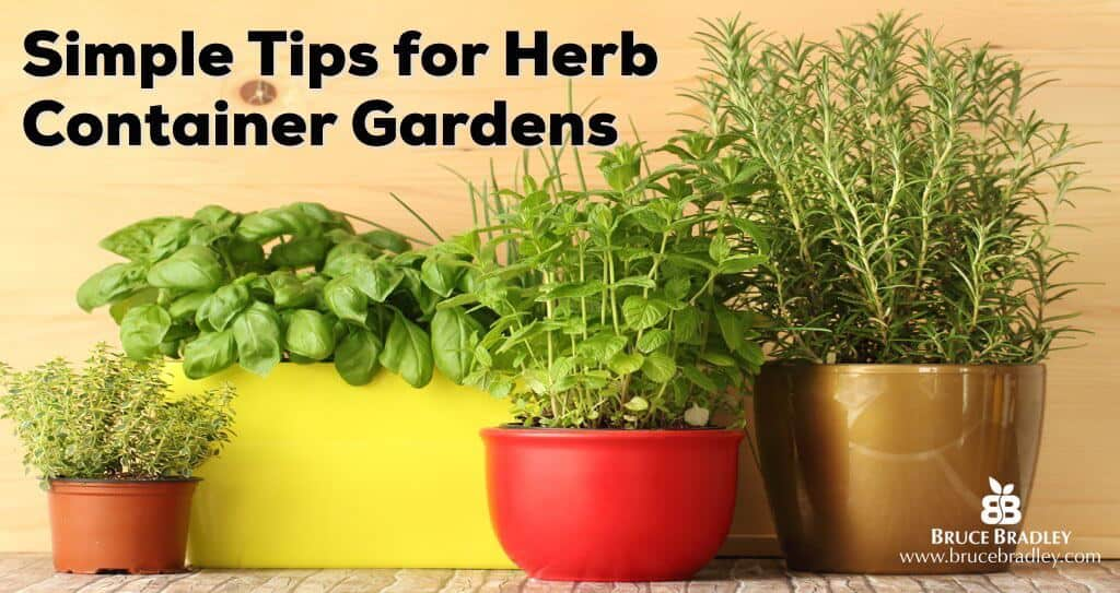 Simple Tips for Herb Container Gardens