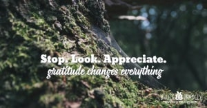 Stop. Look. Appreciate. Those simple acts will transform your world and fill it with gratitude!